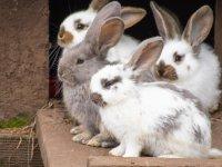 Patenschaftsvermittlung - Kaninchen - 50 €